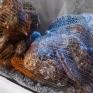 Устрицы Харьков. Живые устрицы хранятся в аквариуме с морской водой - фото