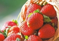 Свежие фрукты -  Клубника